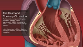 The Principles of Cardiac Catheterization